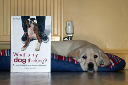 Harry and his book - What is my Dog Thinking