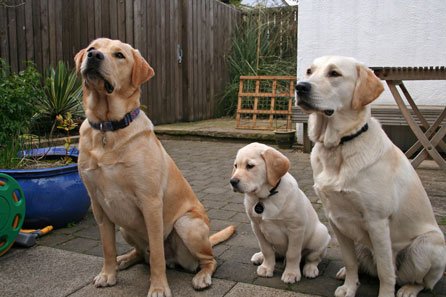 Hadley, Harry and Goldie