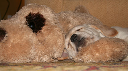 Harry snoozes with Fred
