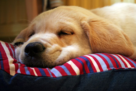 Crashed out pup