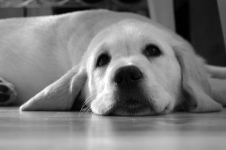 Harry looking angelic