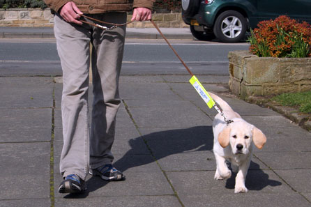 Harry out and about