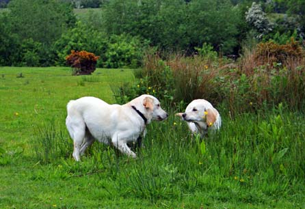 Goldie and Harry free running