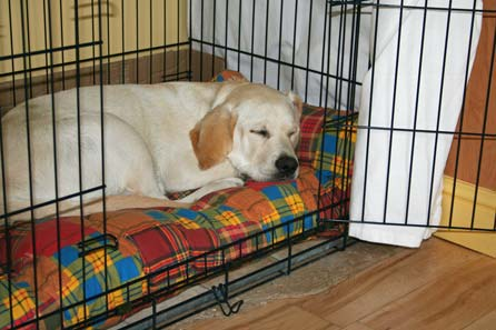 Asleep in his kennel