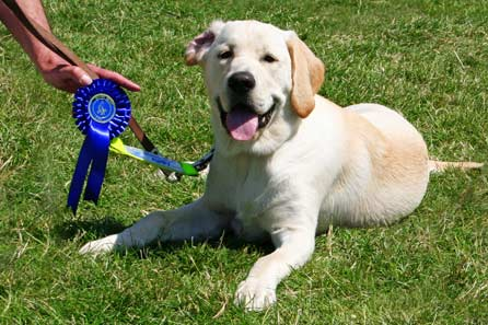 Harry and his rosette