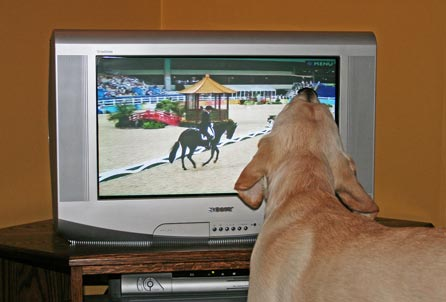 Sniffing the TV