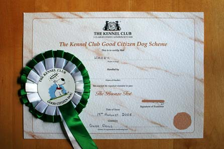 Bronze Award Certificate and Rosette