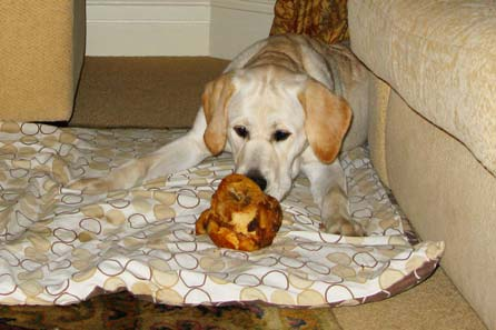 Harry and the biggest bone ever