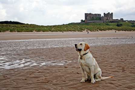 On Bamburgh Beach