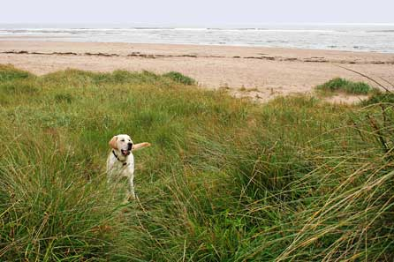 Surveying the dunes