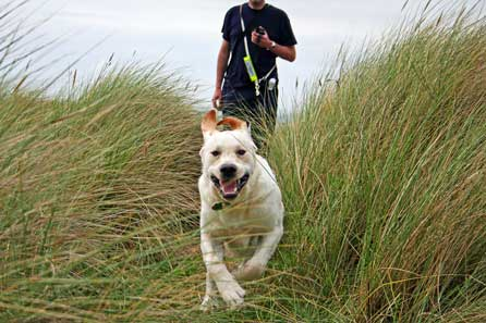 Harry charging through the dunes