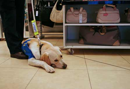 Harry - totally bored in the handbag section