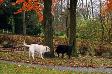 Harry and Kirk foraging in the leaves
