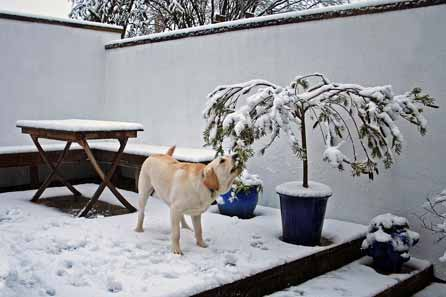 Harry investigates the snow on the tree