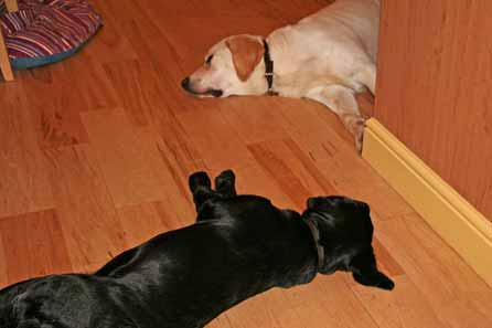 Harry and Blaze crash on the kitchen floor