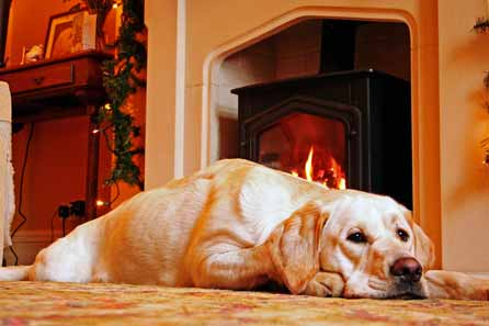 Harry lying ib front of the fire