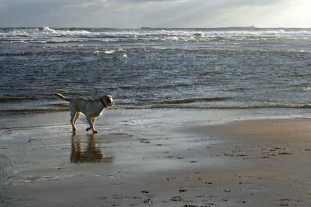 Harry on the beach