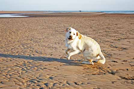 Giddy pup on the beach
