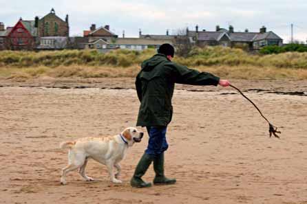 Harry chasing seaweed