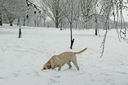 Harry eating snow