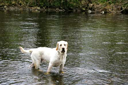 Harry standing in the river