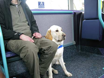 Harry riding on the bus