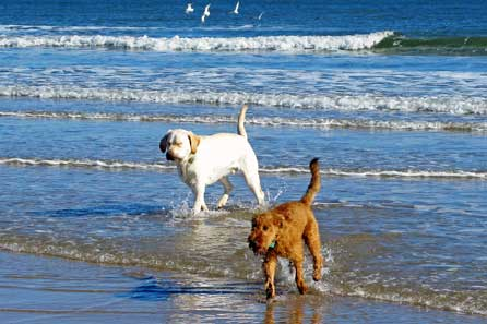 Harry and Alfie coming out the sea at break-neck speed