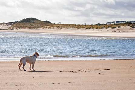 Harry on Alnmouth beach