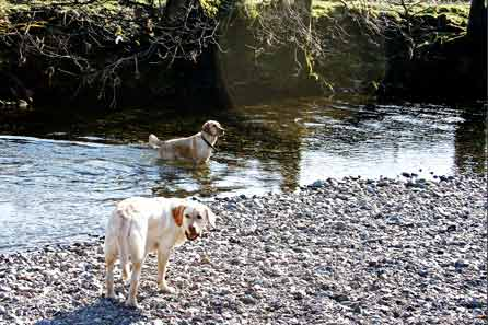 Harry and Alfie in the river