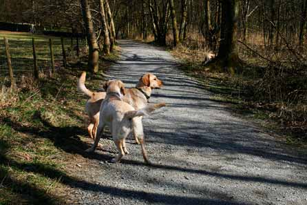 Harry and Alfie on the woodland path