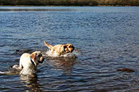 Harry and Alfie swimming together in the lake