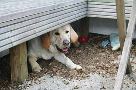 Harry digging under the garden seat