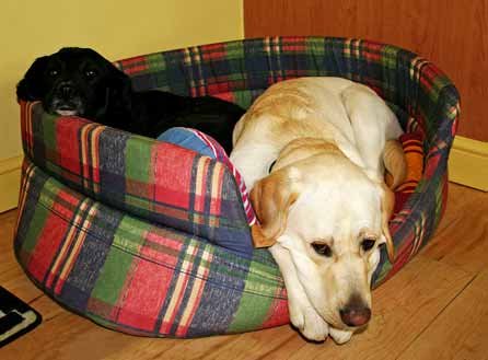 Harry sulks while sharing his bed with Lacey